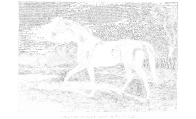 horse copy and pasted inverted